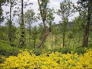 Nelliampathi - Image: Nelliyampathy 03