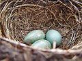 Nest Rex 2.jpg