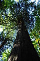 Newhalem, WA - Trail of the Cedars 17.jpg