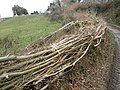 Newly laid hedge, near Peck Farm - geograph.org.uk - 1195667.jpg