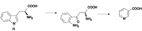 Nicotinic acid biosynthesis2.png