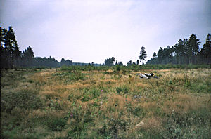 Nidda (river) - Image: Niddaquelle Moor