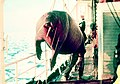 Noaa-walrus29.jpg