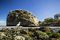 O pássaro e a pedra.jpg
