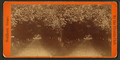 Orange archway on Mr. Ball's place, known as Lover's Lane, from Robert N. Dennis collection of stereoscopic views 3.png