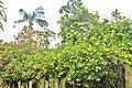 Orchid Garden Bali Indonesia - panoramio (13).jpg