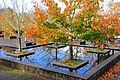 Oregon Garden - Silverton, Oregon - DSC00288.jpg