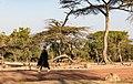 Oromia IMG 5211 Ethiopia (25762136058).jpg