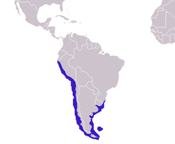 Otaria flavescens distribution.png