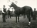 Outlook 1918 AJC Champagne Stakes Randwick Racecourse Trainer C.Moore Jockey G.Harrison.jpg