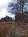 Overgrown track from A93, rounding Craig Ferrar - geograph.org.uk - 364452.jpg