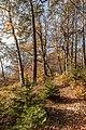 Pörtschach Niedere Gloriette Waldwanderweg 05112017 1894.jpg