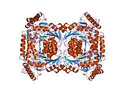 5-Aminolävulinatsynthase, unspezifische