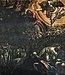 Paintings by Tintoretto in Scuola Grande di San Rocco - Sala superiore - The Prayer in the Garden.jpg