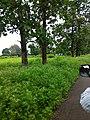 Panna, Madhya Pradesh 485661, India - panoramio.jpg