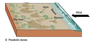 Dune - Schematic of coastal parabolic dunes
