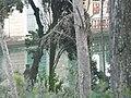 Parc del Laberint P1080881.JPG