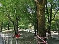 Parco Parri - Vigevano (II).jpg