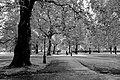 Parco buckingham palace.jpg