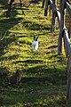 """Parcul de Animale - """"Moara de Vant"""" (8110138003).jpg"""