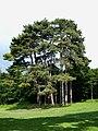 Paris-FR-75-Bois de Boulogne-28 mai 2019-arbres-1.jpg