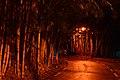 Parque de Águas Claras à noite.jpg