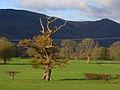 Pastures, Keswick - geograph.org.uk - 1040887.jpg