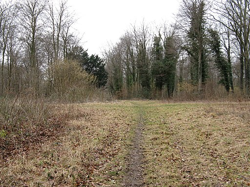 Path junctions at southern edge of Eartham Woods - geograph.org.uk - 1757935