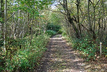English: Path through the woods