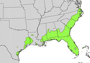 Persea borbonia - Image: Persea borbonia range map
