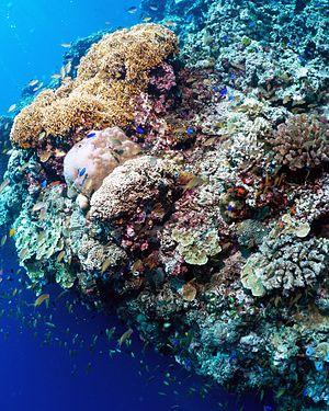 Moalboal, Cebu - Pescador Island coral reef