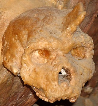 Accretion model of Neanderthal origins - Image: Petralona skull covered by stalagmite CROP ROTATE CONTRAST