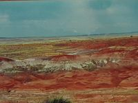 Petrified Forest Picture.jpg
