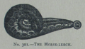 Picture Natural History - No 301 - The Horse-leech.png