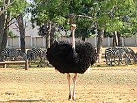 PikiWiki Israel 53072 wildlife animals.jpg
