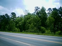 Piney Woods 2.jpg