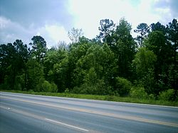 The Piney Woods viewed from Loop 390 outside of Marshall, Texas