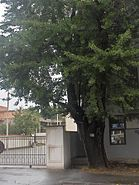 Pit Arbore Egalitatii