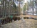 Pludi druvciema 2011 - panoramio (41).jpg