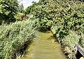 Plummers Water, Pylewell - geograph.org.uk - 1431810.jpg