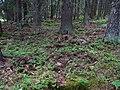 Pod Farským lesem 14.jpg