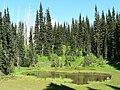Pond surrounded by firs. (3eb2e9e8dba343f3877e4ebd73f0a57d).JPG