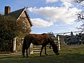 Pony grazing at the gate to Hincheslea House, New Forest - geograph.org.uk - 146304.jpg