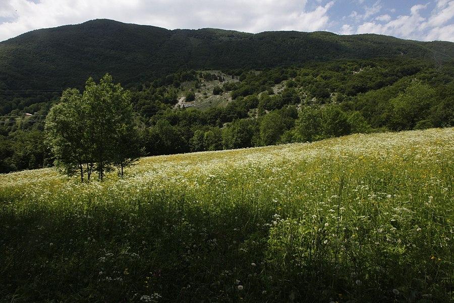 Une prairie en fleur au mois de juin dans la vallée de la Valserine.