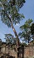 Preah Khan, Angkor, Camboya, 2013-08-17, DD 35.JPG