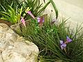 Pretty plant in Parc Phoenix.JPG