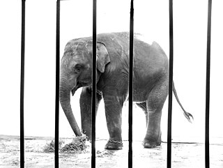 Captivity (animal) Animal being held by humans
