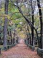 Promenade, chestnut trees (6382414743).jpg