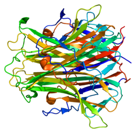 Protein TNFSF11 PDB 1s55.png