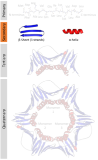 Protein secondary structure general three-dimensional form of local segments of proteins